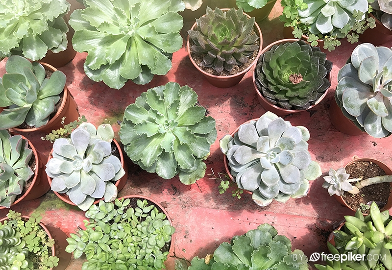 Decorative Showpiece Flower & Cactus