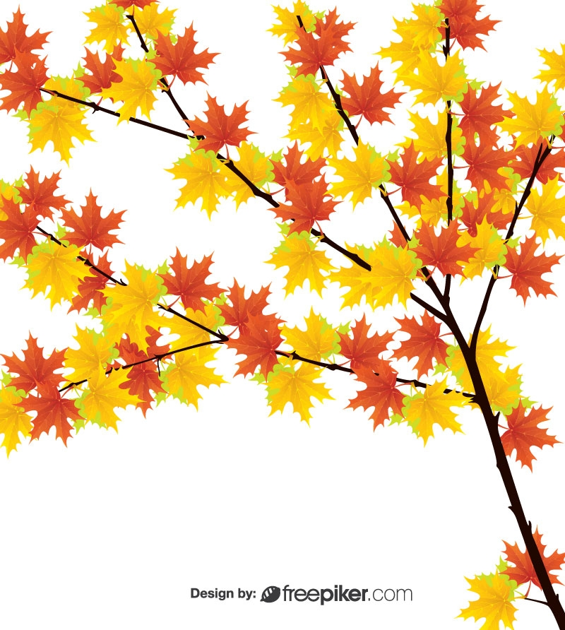Different Colorful Leaf With Tree