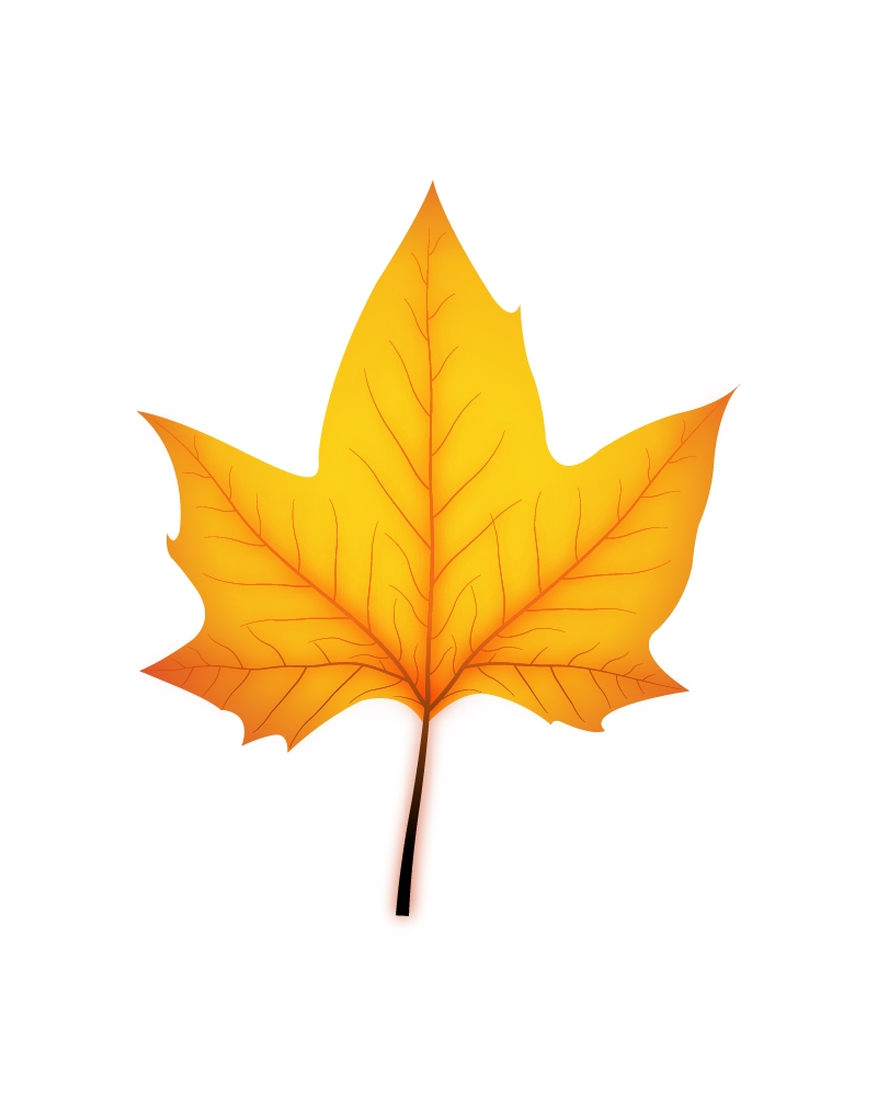 Maple brown leaf Vecto