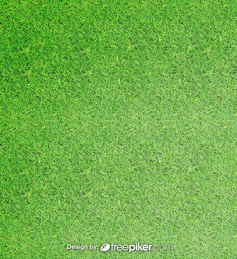 Green Filed Grass Texture