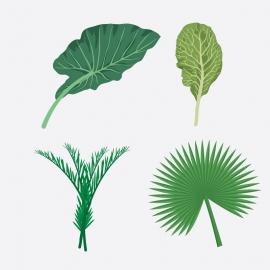 Leaf Character