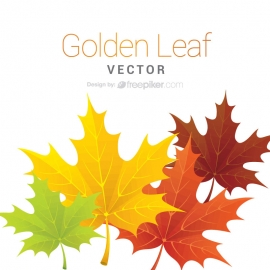 Maple Leaf Vector Design
