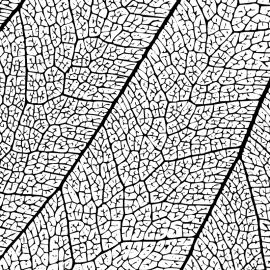 Leaf Texture Black White Background